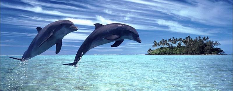 Dolphin watch in khasab musandam