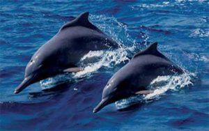 Khasab Dolphin Watching
